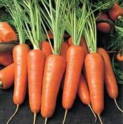 морковь,  морковь,  морковь оптом