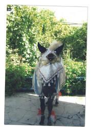 Прокат лошадиОформление шарами. Салюты,  фонтаны,  конфетти. Прокат лоша